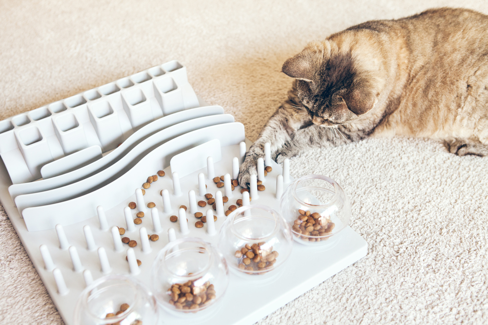 Speelset voor katten